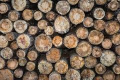 Gestapeld de Ontbossings Volledig Kader van het Logboeken Tropisch Regenwoud Royalty-vrije Stock Foto's