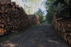 Gestapelde bomen in het bos stock foto