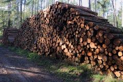 Gestapelde bomen in het bos stock foto's