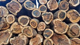 Gestapelde de boomstammen van de zaagbesnoeiing samen het tonen van dwarsdoorsnede royalty-vrije stock fotografie