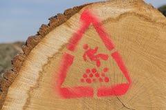 Gestapelde gezaagde boomstammen Royalty-vrije Stock Afbeeldingen