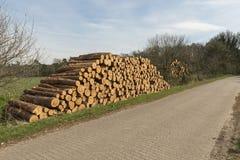 Gestapelde gezaagde boomstammen Stock Afbeelding