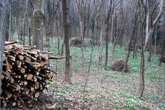 Gestapelde logboeken en bomen Royalty-vrije Stock Foto's