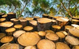 Gestapelde ruwe logboeken met groene treetops en blauwe hemel stock fotografie