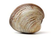 Gestapelde verse ruwe tweekleppige schelpdieren stock afbeeldingen