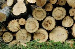 Gestapelte Brennholzbaumprotokolle Stockbild