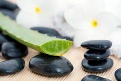 Gestapelte Steine und Aloe Lizenzfreie Stockbilder