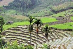 Gestapte Rijstterrassen in Zuid-Azige Stock Afbeeldingen