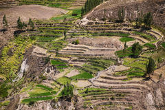 Gestapte terrassen in Colca-Canion in Peru Royalty-vrije Stock Foto's