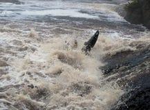 Gestemd beeld die kayaker vechten Royalty-vrije Stock Foto