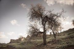 Gestemd beeld van amandelbomen en ruïnes in verlaten dorp in Tylliria, Cyprus Royalty-vrije Stock Afbeeldingen