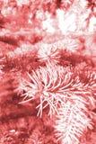 Gestemd beeld van een tak van een naaldboom stock fotografie