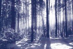 Gestemde het bos van de winter stock afbeelding