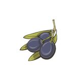 Gestileerd zwart olijvensymbool, geïsoleerde illustratie Stock Afbeelding