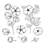 Gestileerde beeldenreeks witte katoenen bloemen Vector geplaatste illustraties Katoenen bloeminstallatie, organische bal pluizige royalty-vrije illustratie