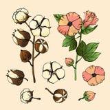 Gestileerde beeldenreeks witte katoenen bloemen Vector geplaatste illustraties Katoenen bloeminstallatie, organische bal pluizige vector illustratie