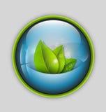 Vector illustratie van verse bladeren in wateraquarium Stock Foto