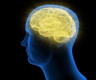 Gestileerde medische illustratie van een menselijk hoofd Royalty-vrije Stock Afbeeldingen