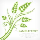 Gestileerde oren van tarwe in groen Royalty-vrije Stock Fotografie
