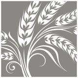 Gestileerde oren van tarwe op grijs Royalty-vrije Stock Fotografie