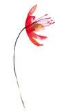 Gestileerde rode bloem Royalty-vrije Stock Afbeelding
