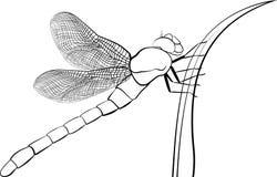 Gestileerde roofzuchtige die insectlibel op wit wordt geïsoleerd Royalty-vrije Stock Fotografie