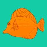 Gestileerde tropische vissen. Stock Afbeelding