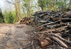 Gestione di terreno boscoso o alberi di taglio, distruzione dell'habitat. Immagini Stock