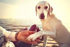 Gesto de mano de la pata y del hombre del perro de la amistad Imagen de archivo libre de regalías
