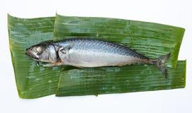 Gestoomde Makreel Stock Fotografie