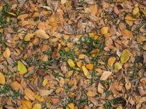 Gestorven bladeren op achtergrond stock foto