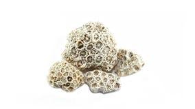 Gestorven overzees koraal stock fotografie