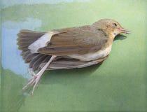 Gestorven vogel op groen voor gebruik voor aardramp en Vogelinfluenz stock fotografie