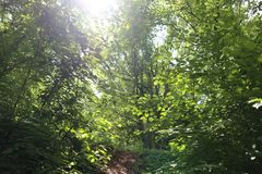 Gestrüpp mit Sonnenstrahlen stockfoto