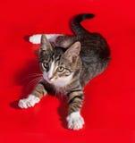 Gestreept katje die op rood liggen Royalty-vrije Stock Afbeeldingen