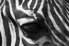 Gestreept oog in zwart-wit effect stock fotografie