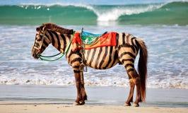 Gestreept paard Stock Foto