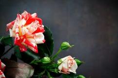 Gestreept Tiger Roses, Bloemen op Donkere Achtergrond, kaart voor Valentijnskaartendag, exemplaarruimte Royalty-vrije Stock Foto's