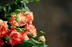 Gestreept Tiger Roses, Bloemen op Donkere Achtergrond, kaart voor Valentijnskaartendag, exemplaarruimte Stock Foto's
