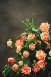 Gestreept Tiger Roses, Bloemen op Donkere Achtergrond, kaart voor Valentijnskaartendag, exemplaarruimte Royalty-vrije Stock Afbeeldingen