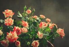 Gestreept Tiger Roses, Bloemen op Donkere Achtergrond, kaart voor Valentijnskaartendag, exemplaarruimte Stock Fotografie