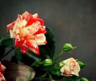 Gestreept Tiger Roses, Bloemen op Donkere Achtergrond, kaart voor Valentijnskaartendag, exemplaarruimte Stock Foto