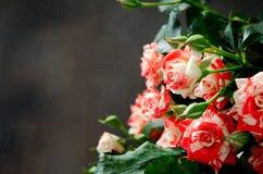 Gestreept Tiger Roses, Bloemen op Donkere Achtergrond, kaart voor Valentijnskaartendag, exemplaarruimte Royalty-vrije Stock Fotografie