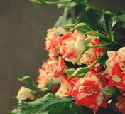 Gestreept Tiger Roses, Bloemen op Donkere Achtergrond, kaart voor Valentijnskaartendag, exemplaarruimte Royalty-vrije Stock Afbeelding