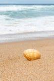 Gestreept Wit en Oranje Clam Shell op Australisch Strandzand stock foto's
