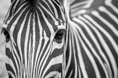 Gestreept Zwart-wit Gezicht royalty-vrije stock fotografie