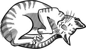 Gestreepte Cat Curled Up Asleep Royalty-vrije Stock Afbeelding