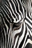 Gestreepte Close-up Royalty-vrije Stock Afbeeldingen