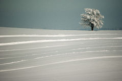 Gestreepte de winter Stock Afbeeldingen