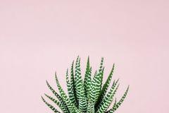 Gestreepte druk succulent op pastelkleur roze achtergrond stock fotografie